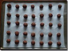 seed bombs 011