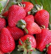 California berries and backyard rhubarb