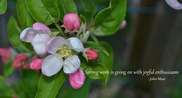 DSC_0015 Spring copy